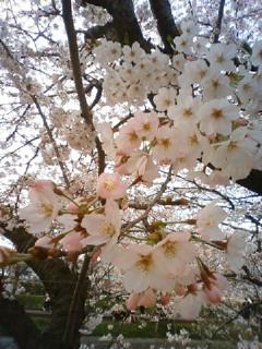 桜&お絵描き祭り