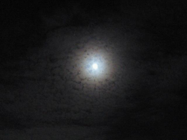 綺麗なお月さま